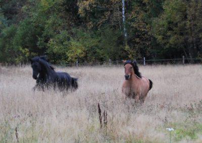 Hesteslipp-10