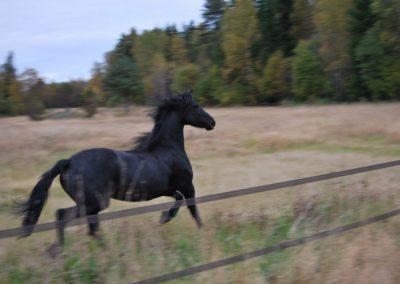 Hesteslipp-2