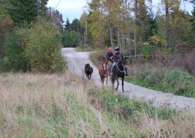 Hesteslipp-3