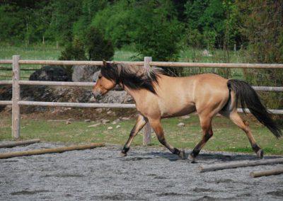 Trening-og-kommunikasjon-med-hest-0