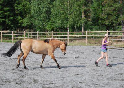 Trening-og-kommunikasjon-med-hest-1