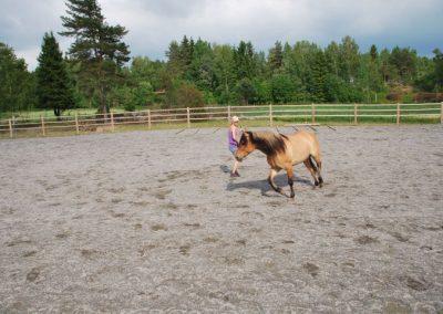 Trening-og-kommunikasjon-med-hest-10