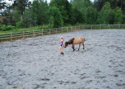 Trening-og-kommunikasjon-med-hest-11