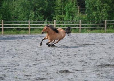 Trening-og-kommunikasjon-med-hest-12