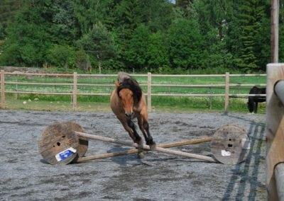 Trening-og-kommunikasjon-med-hest-13