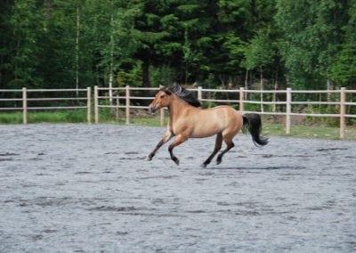 Trening-og-kommunikasjon-med-hest-14