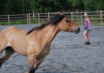 Trening-og-kommunikasjon-med-hest-15