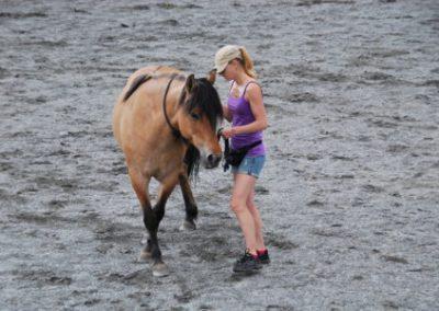 Trening-og-kommunikasjon-med-hest-3