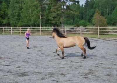 Trening-og-kommunikasjon-med-hest-4