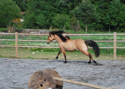 Trening-og-kommunikasjon-med-hest-7