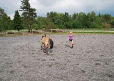 Trening-og-kommunikasjon-med-hest-8
