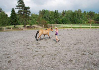 Trening-og-kommunikasjon-med-hest-9